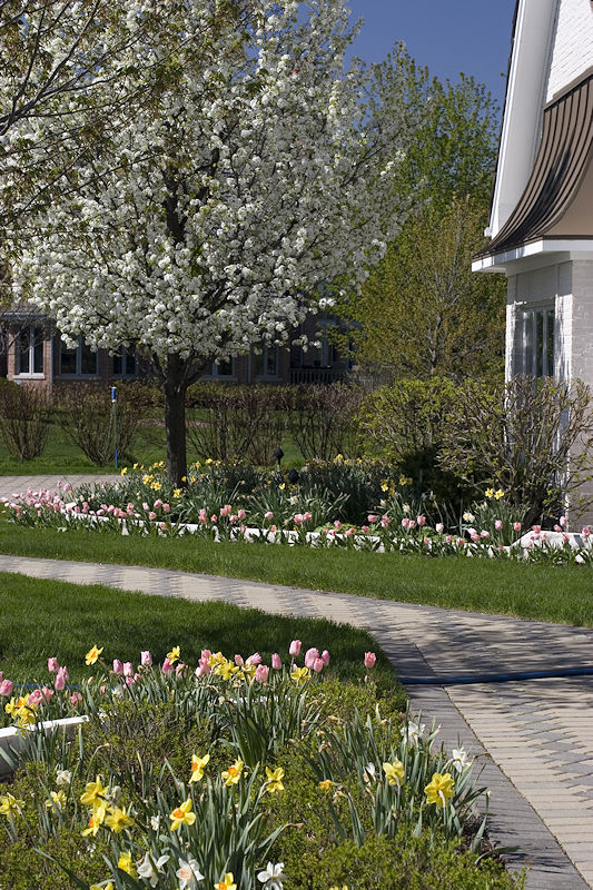 Plant Black Cherry Trees For The Birds Bees Spring Flowers And